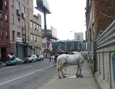 last-horse-in-ny_1.JPG